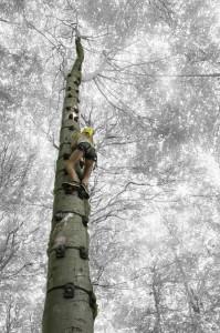 Digitale billeder frit motiv 01 Guld Kurt Jeppesen Sarah i træet